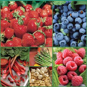 Gourmet Fruit and Vegetable Garden