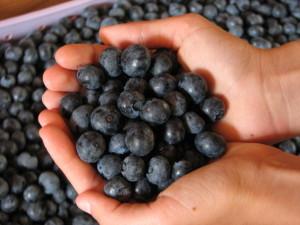 Barefoot Blueberries