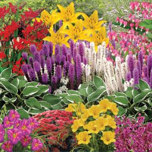 Effortless Perennial Garden