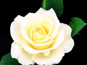 elina-rose-crop